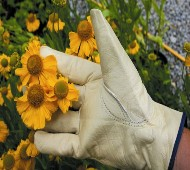 Leather Gloves - protect from rose thorns in the garden. Small size